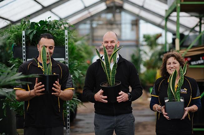 Hire Plants